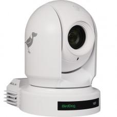 PTZ Камера BirdDog Eyes P200 (White)